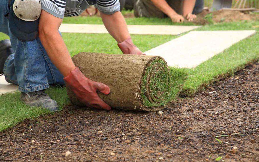 Landscaping Where Grass Won't Grow