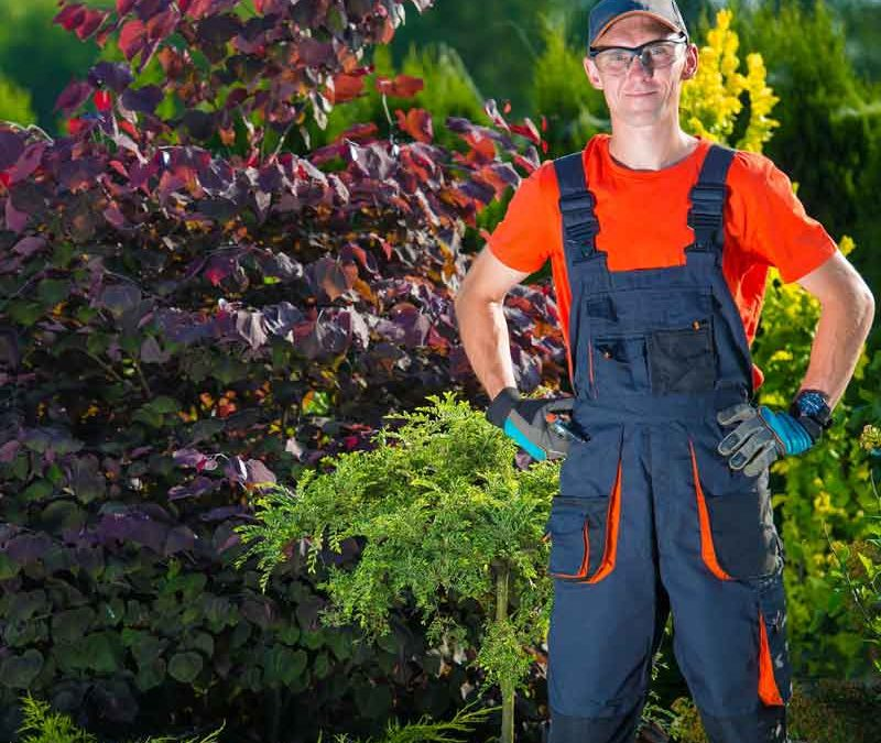 Top 3 Landscaping Tips